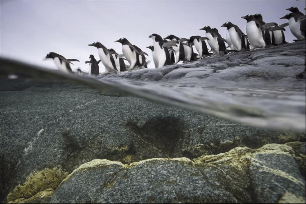 kutuplar penguen