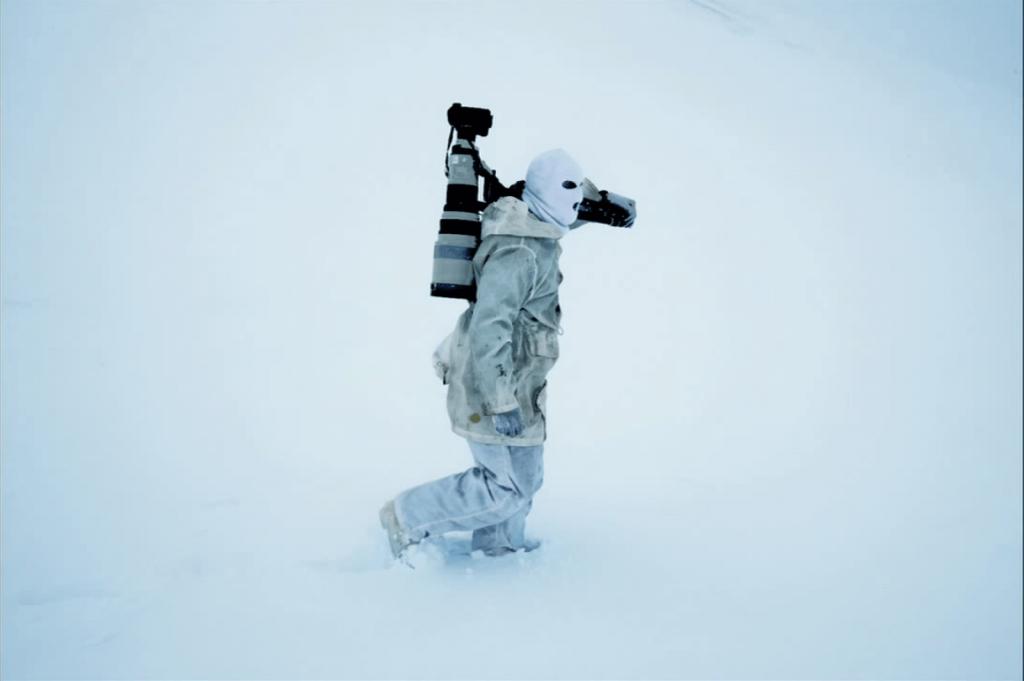 antarktika vahşi yaşam