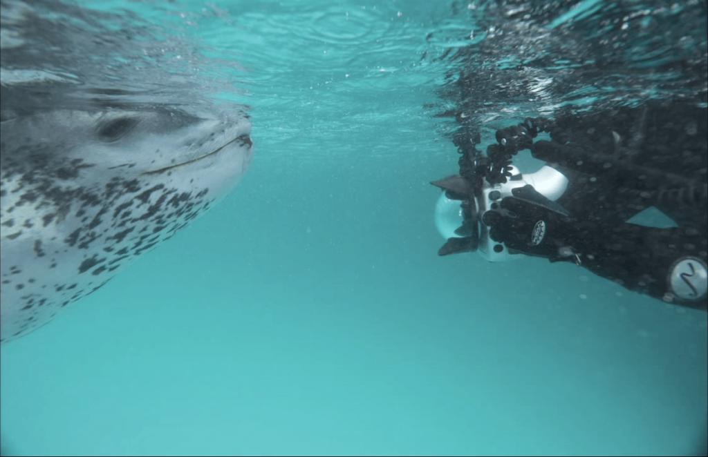 fok balığı fotoğraf