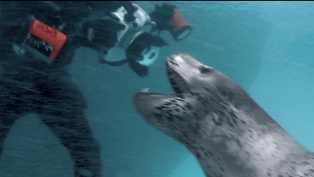 fok balığı saldırısı