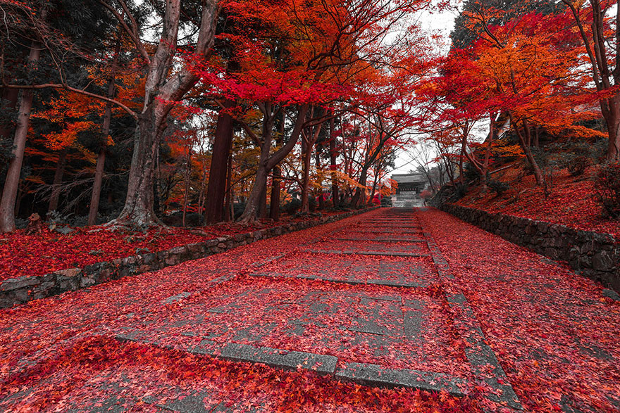 dünyanın en büyüleyici yolları - japonya