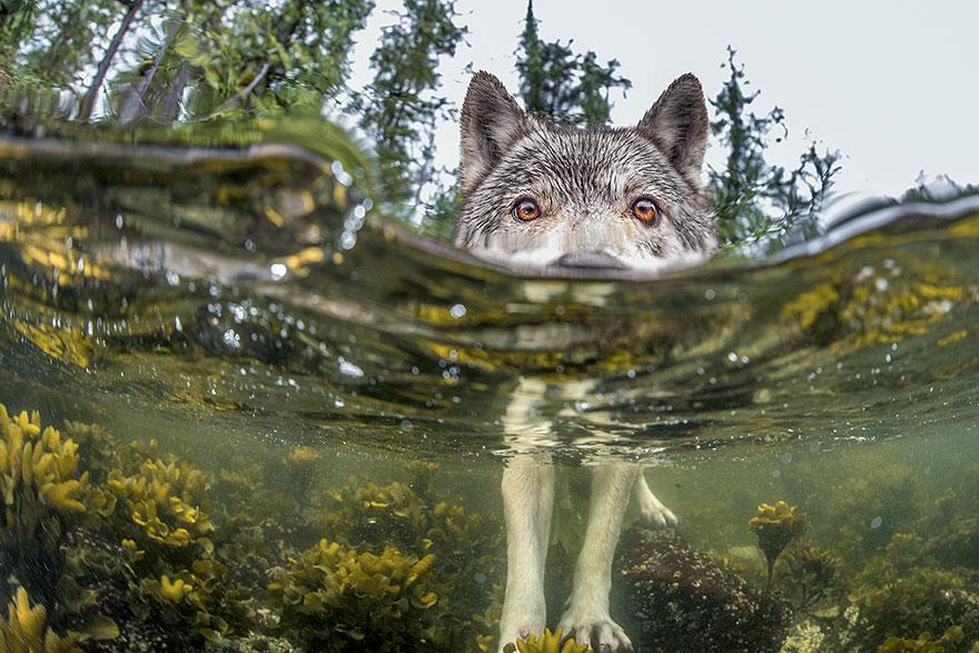 National Geographic en iyiler 6